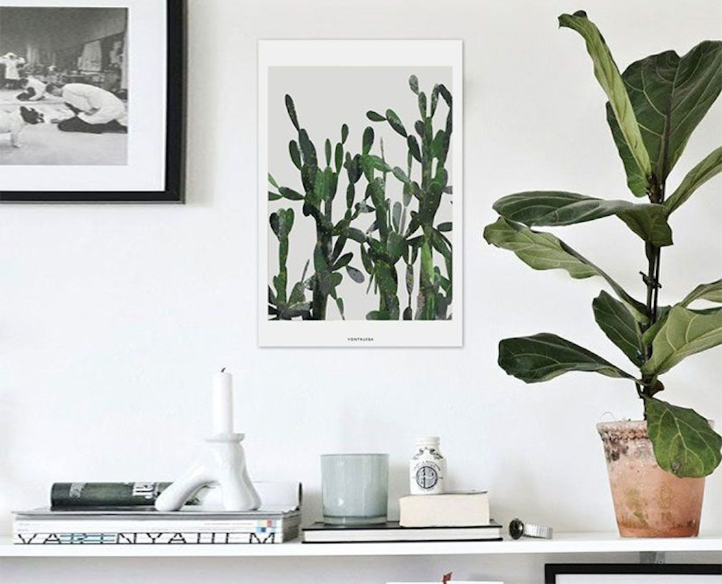 Fiddle Leaf Fig Tips Tricks Darling Magazine