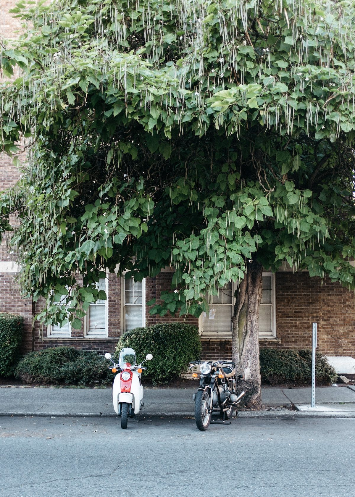 scooter trees travel