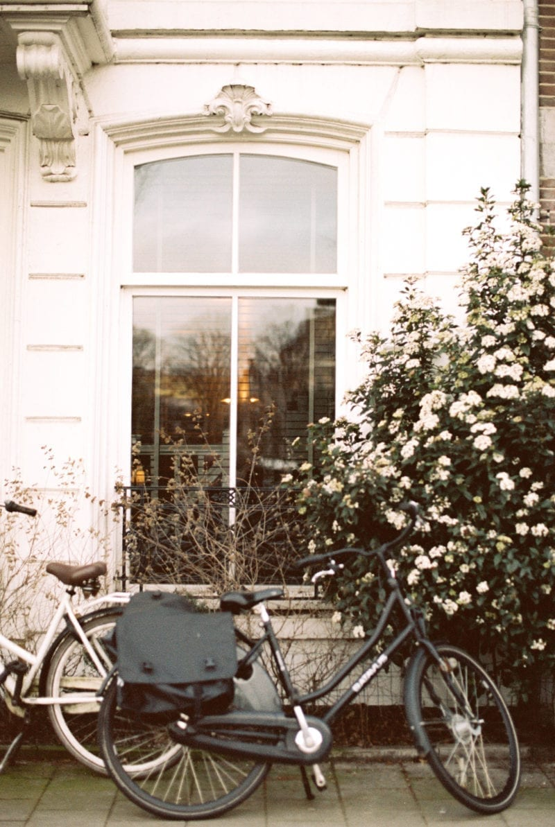 A bicycle leaned a against a window near a rosebush