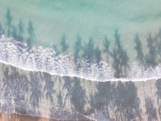 An aerial picture of a shoreline with trees lining it and the shadow of trees in the water