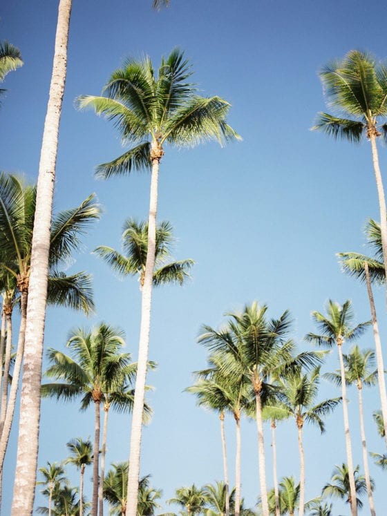 A skyline view of palm trees