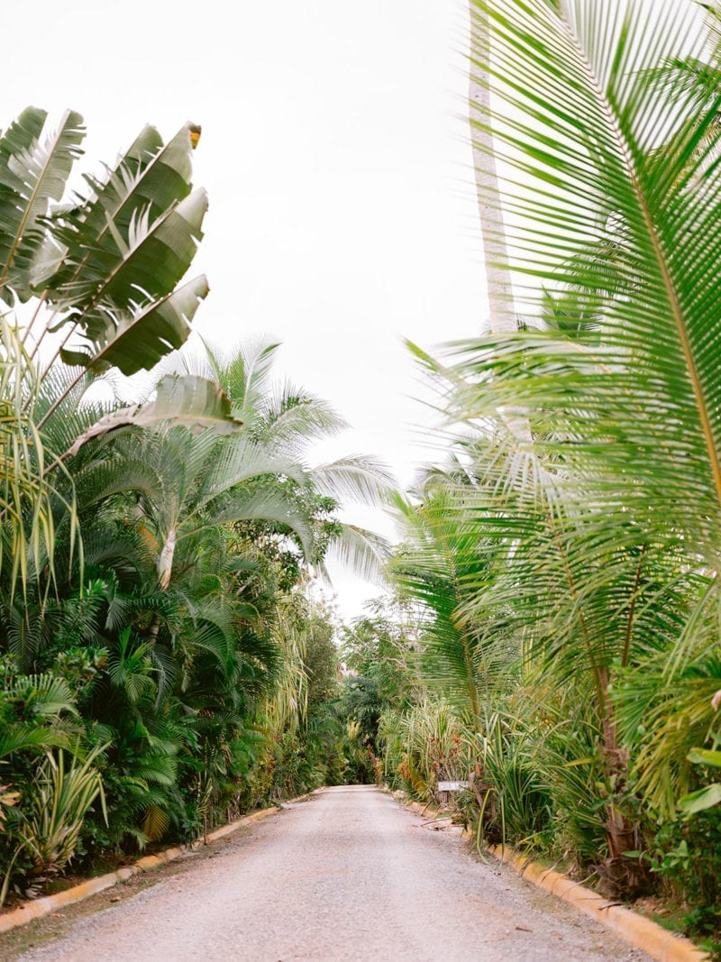 A road lined by palm trees